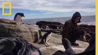 Rockhopper Penguins, Up Close: On Location | Hostile Planet