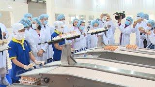 Phát triển nông nghiệp công nghệ cao trong chế biến trứng gia cầm