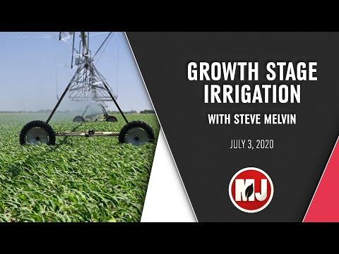 Growth Stage Irrigation   Steve Melvin   July 3, 2020