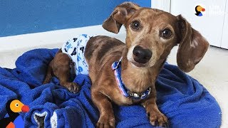 Dog Who Couldn't Walk Inspires His Parents Every Single Day - LITTLE DIPPER | The Dodo