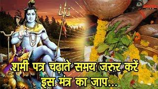 शमी पत्र चढ़ाते समय जरुर करें इस मंत्र का जाप, भगवान शंकर जल्दी दूर करेंगे आपकी दरिद्रता...