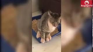 Кот и лоток