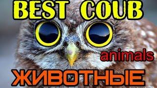 ЖИВОТНЫЕ Best coub, ПРИКОЛЫ С ЖИВОТНЫМИ Коуб лучшее подборки +в хорошем качестве