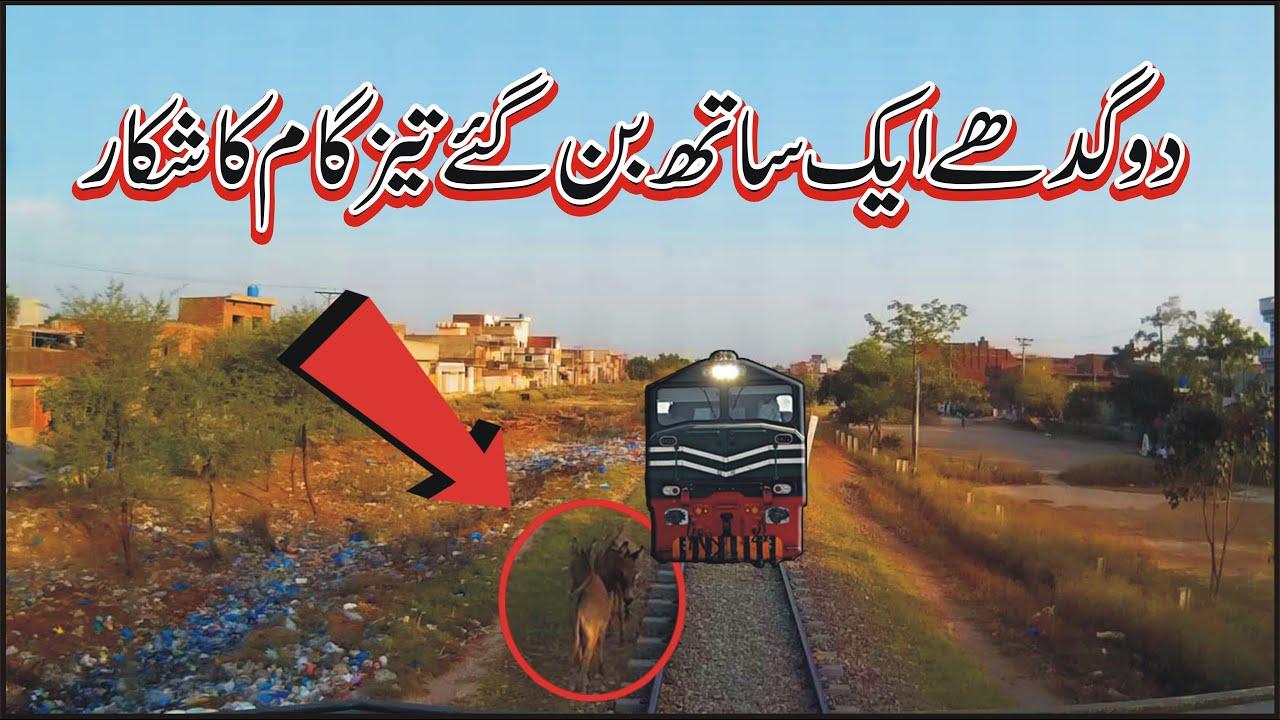Live two Donkeys hit with fastest train Tezgam 8dn near Kamoke Station Pakistan Railways