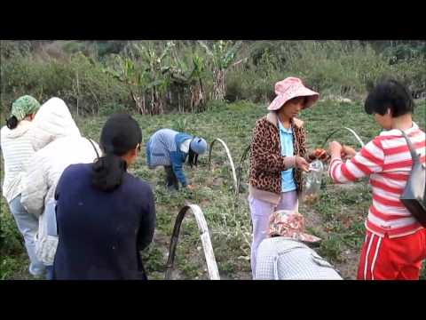 Community-Shared Agriculture in the Philippines
