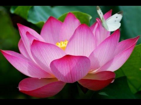 fabulous fibonacci flowers fibonacci sequence 1 61810339887 youtube