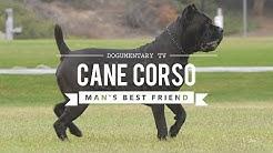 CANE CORSO: MAN'S BEST FRIEND