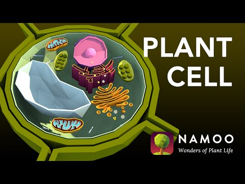 Biology with NAMOO: Plant Cell Structure