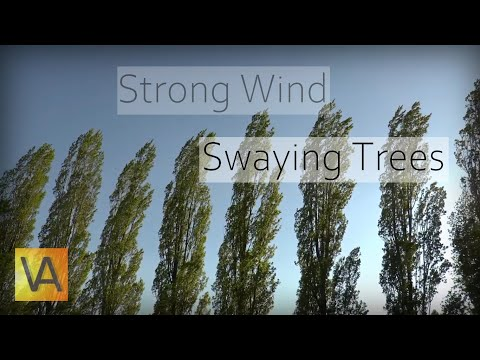 Strong Wind Blowing Through Trees (Natural White Noise/Relaxing Sound for Sleeping)