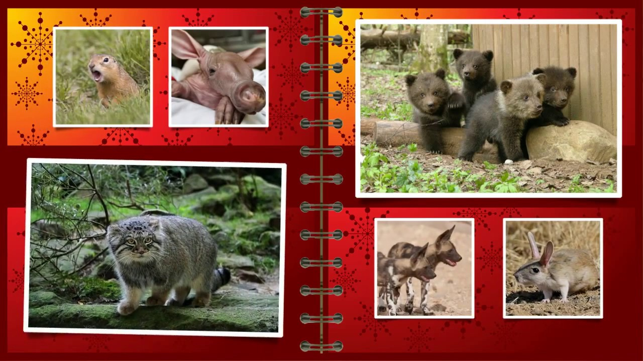 Animals of the Red Book of the Krasnoyarsk Territory - a list, features and interesting facts 96