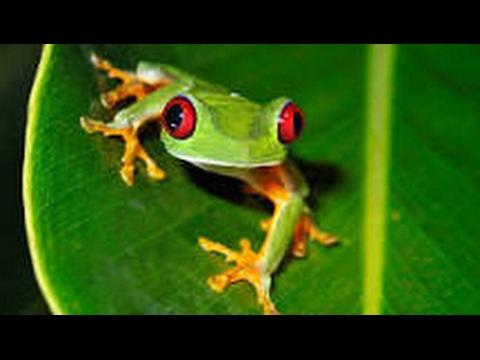 Costa Rica Night Sounds Jungle