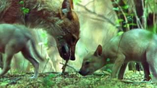 Top 10 Filhotes Selvagens - Famílias Estranhas
