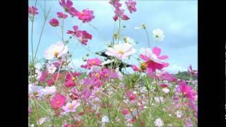 花田真衣 - 釧路哀歌