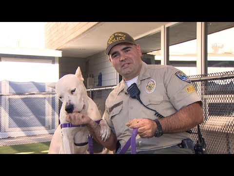 Holiday Pet Adoptions at the Santa Monica Animal Shelter