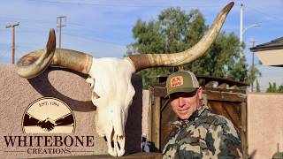 HOW TO CLEAN A LONGHORN BULL SKULL