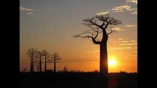 Orchestra Baobab - Seeri Koko