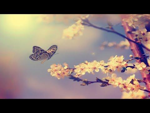 Fantasy Harp Music: Study, Sleep, Meditation, Spa| Beautiful Relaxing Background Music ★61