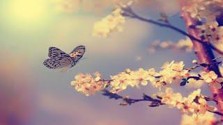 Fantasy Harp Music: Study, Sleep, Meditation, Spa   Beautiful Relaxing Background Music ★61
