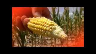 DROUGHT 2012 Famine Coming to USA GET READY