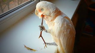 Playful Birds 🦜🦜 Crazy Parrots Doing Crazy Things (Full) [Funny Pets]