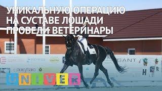Уникальную операцию на суставе лошади провели ветеринары