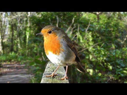 птицы видео для кошек смотреть