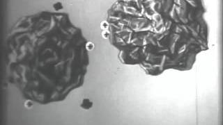 электрокинетические свойства