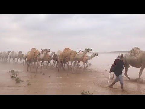 Саудовская Аравия: пустыня