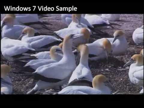 Windows 7 Sample Video - Wildlife - YouTube
