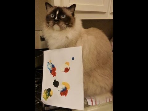 Cats Painting Artwork Kitty Casso Paint Kit - Kitty-Casso™ Art Kit Review - ねこ - ラグドール -- Floppycats