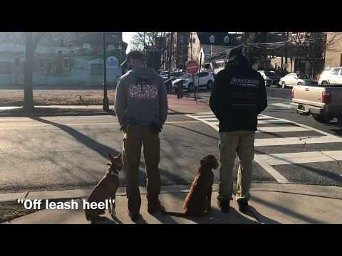 5mo Golden Retriever (Abram) Best dog trainers in Virginia