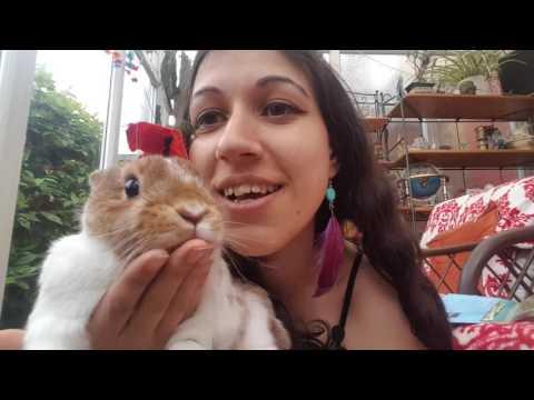 Romanian Leu and Timisoara trip