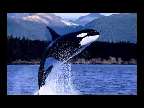 Chorus of Whales (Relaxation - Voices of Nature)