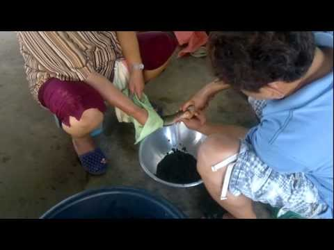 AIT Training: Catfish Breeding And Grow-out