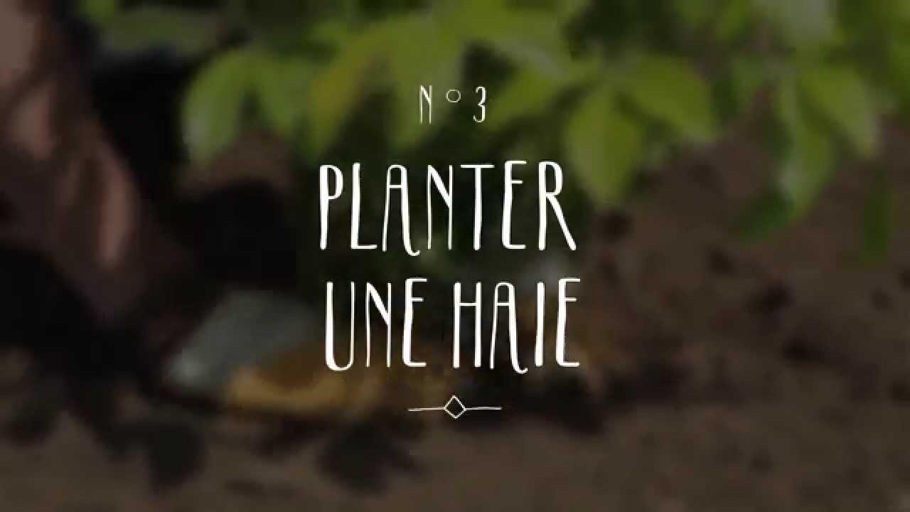 Bien planter une haie youtube - Quand planter des arbustes de haies ...