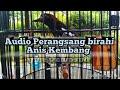 Anis Kembang  Menit Audio Perangsang Birahi Anis Kembang  Mp3 - Mp4 Download