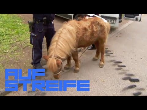 Pony verursacht Autounfall: Was macht es auf der Straße? | Teil 1 | Auf Streife | SAT.1 TV
