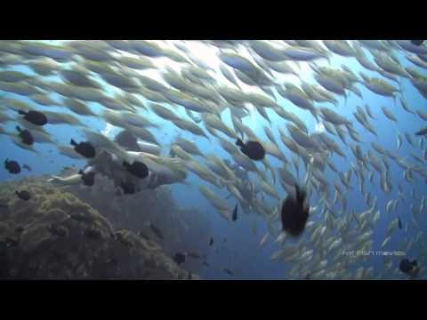 Scuba Diving at Chumphon Pinnacle with Scuba Shack - Koh Tao