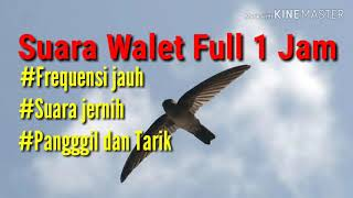 suara-walet-full-1-jam-th-2020