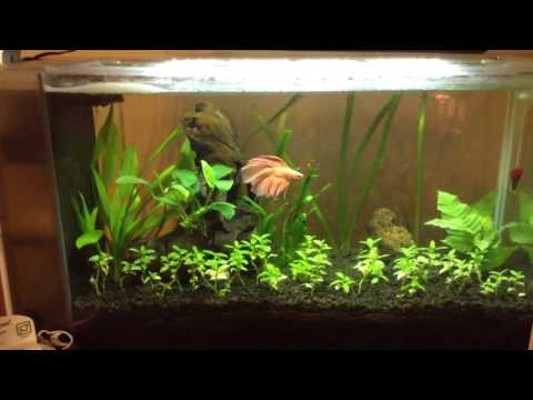 Aquascaping for beginners: Fish Update