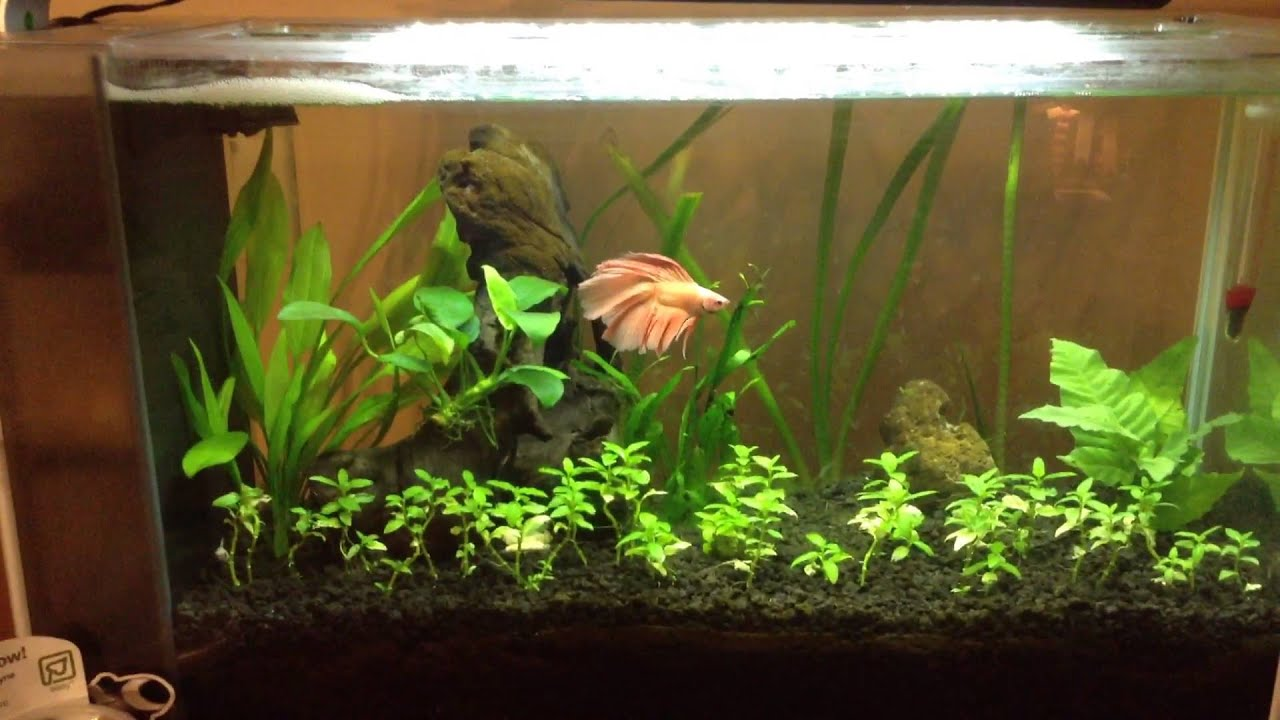 Aquascaping For Beginners: Fish Update   YouTube