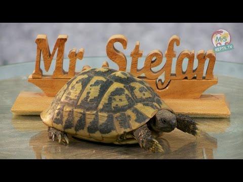 Reptil TV - Folge 72 - Schildkröten Basics