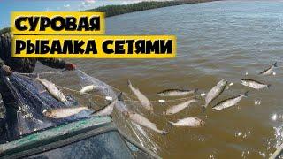 СУРОВАЯ РЫБАЛКА СЕТЯМИ Рыбалка на Амуре Промысловый лов