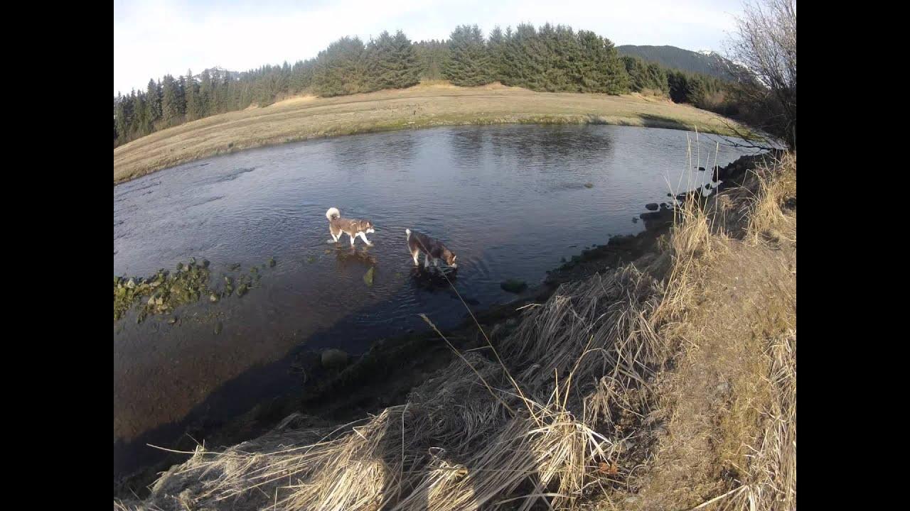 Juneau alaska fish creek mendenhall wildlife game refuge for Juneau alaska fishing