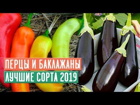 ТОП ПЕРЦЕВ и БАКЛАЖАНОВ 2019 🌟 Обзор сортов / Садовый гид