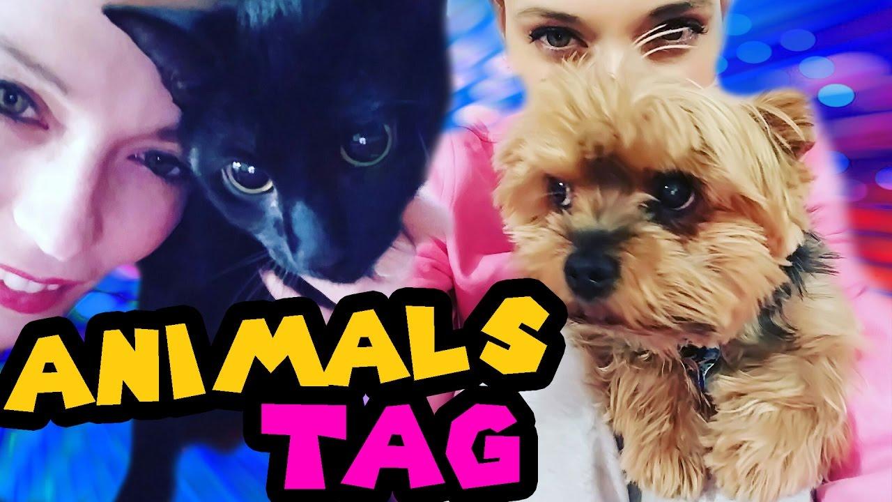 Animals Tag La Storia Dei Nostri Animali Youtube