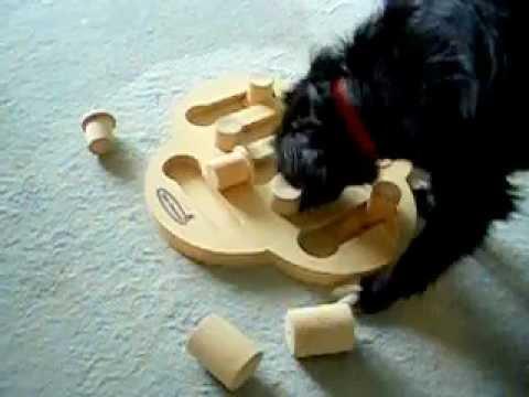 Intelligenzspielzeug Perro mit dog fighter (geliehen)