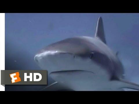 Open Water (10/11) Movie CLIP - Night Storm (2003) HD