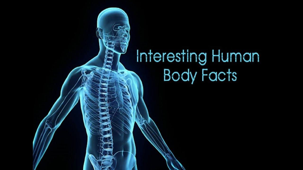 Amazing Facts About Human Body Very Informative Youtube