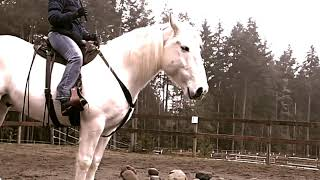 New Foundation Natural Horsemanship